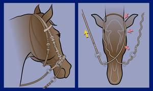 """Caudo-laterale und ventrale Ansicht des unten kreuzenden"""" Bitless Bridle"""". Ein Zug am rechten Zügel (gelber Pfeil) bewirkt einen schmerzlosen Druck gegen die gesamte linke Seite des Kopfes (rote Pfeile) und signalisiert: """"dreh dich zur rechten Seite"""". Ein unterbrochener Zug an beiden Zügeln signalisiert: """"langsamer"""" oder """"stopp"""". © Robert Cook"""