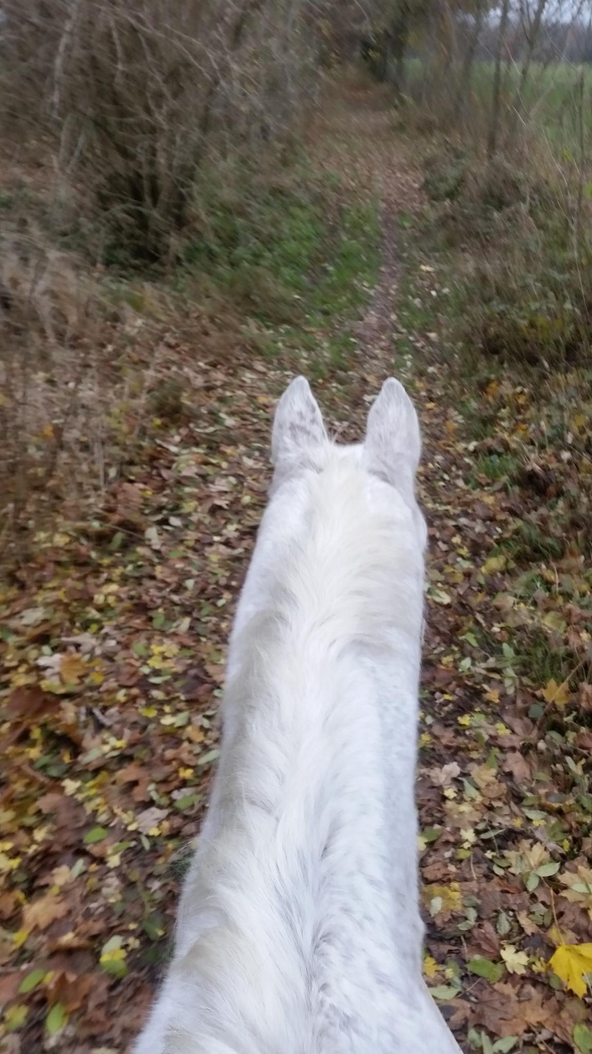 Sie hat sich in dieser Zeit ziemlich verändert und scheuchte mich schon lange nicht mehr über Hindernisse und ging sehr sorgsam mit mir um. Regelmäßig korrigierte sie meine Hufstellung und wir genossen beide schöne Wanderungen oder Ausritte in der freien Natur. - Das war die schönste Zeit in meinem Leben und ist es zum Glück heute noch. Ich lebe immer noch auf der schönen 24h Weide ca. 1 ha mit Heuraufe und Unterstand, teilweise befestigtem Boden und mit meinen Kollegen. Meine Pferdefrau, auch Hufheilpraktikerin, sagt, dass die Pferde, von ihren Arbeitskollegen, die ja die gleiche Hufbearbeitung haben, und die gleiche Haltung genauso glückliche Pferde im hohen Alter haben, denen es mindestens genauso gut geht wie mir. ICH BIN KEIN EINZELFALL, und auch kein WUNDERTIER! Diese Hufbearbeitung und diese artgerechte Haltung ist und bleibt gesund bis ins hohe Alter. Das muss ja endlich mal gesagt werden …. 2016 © Heike Veit