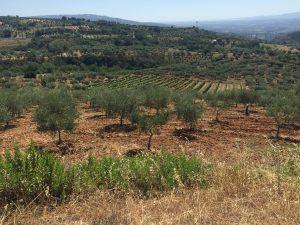 Blick über eine kalabrische Weinlandschaft. © Sofia Biancolin / DESA