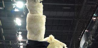 Eisbären Berlin.