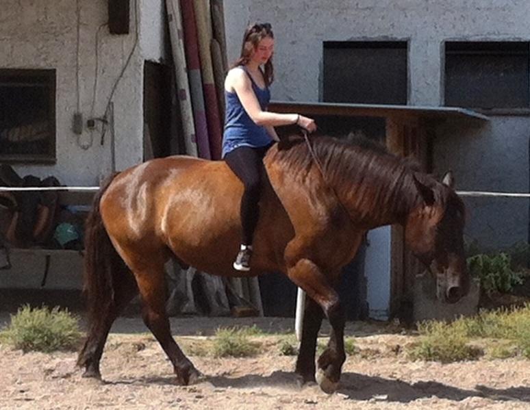 Pferd in natürlicher Bewegung - es geht auch ohne Zügel, nur mit Halsring, wenn eine Vertrauensbasis besteht ©Paschel