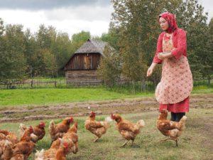 Im Ukrainian Village werden die Hühner gefüttert. © Foto: Rainer Hamberger