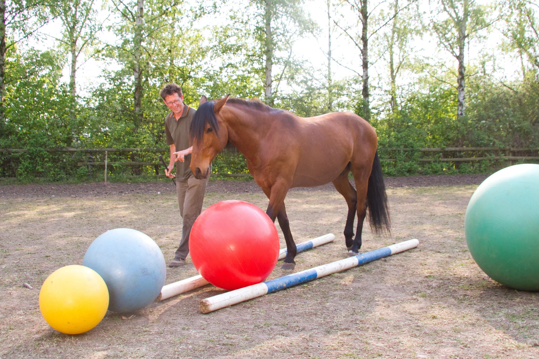 Das Spiel, schafft Abwechselung für Mensch und Pferd, Neu Drefahl, BU Paschel 2011, © Weinzierl, Foto: van Uden