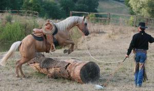 Edwin und Barney: Durch systematisches Heranführen des Pferdes mit Aufgaben am Boden, die freiwillig und spielerisch erfolgen, wird das Pferd auf Sattel und Reiter vorbereitet. 2007© AsvaNara, BU: Bernd Paschel