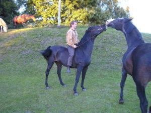Naduah ist ein gutes Beispiel, wie man ein junges Pferd mit drei schon versauen kann und wie es dann mit fünf noch zu retten ist Nadu ist heute 18 und ein absolut zuverlässiges Reitpferd. Nur mit den Herren zickt sie noch herum. © Karola Bady, BU Karola Bady