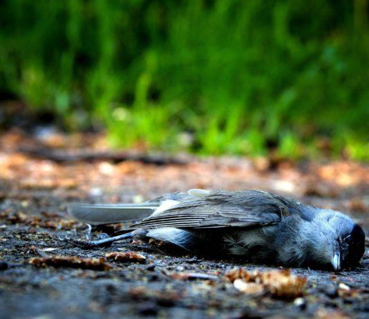 Toter Vogel