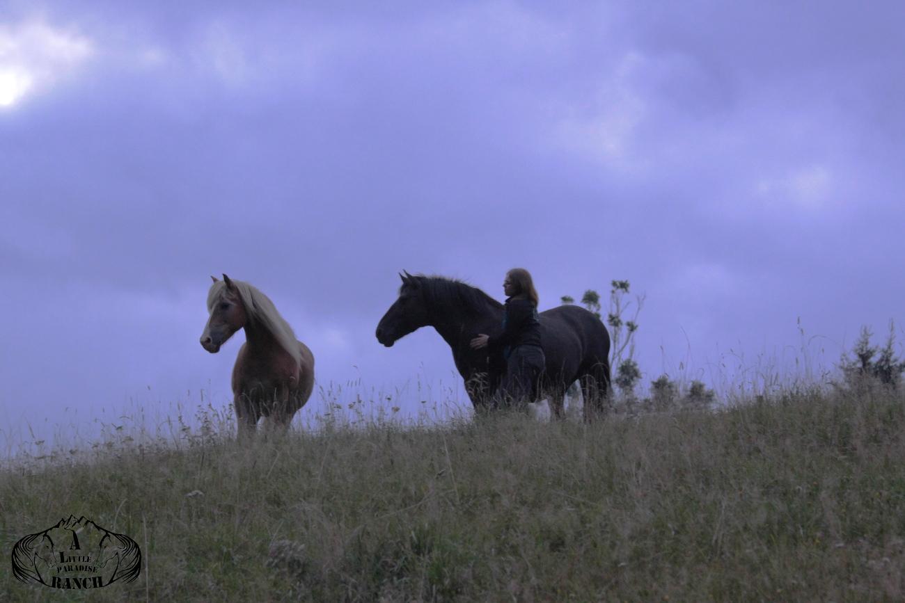 Pandora und Nils, in die Atmosphäre der Herde eintauchen. Man spürt die tiefe Verbundenheit zur Natur und zum Leben. Das ist eines der dinge, die wir von den Pferden lernen können. BU: Lisa Spitzer, 2017, ©Lisa Spitzer