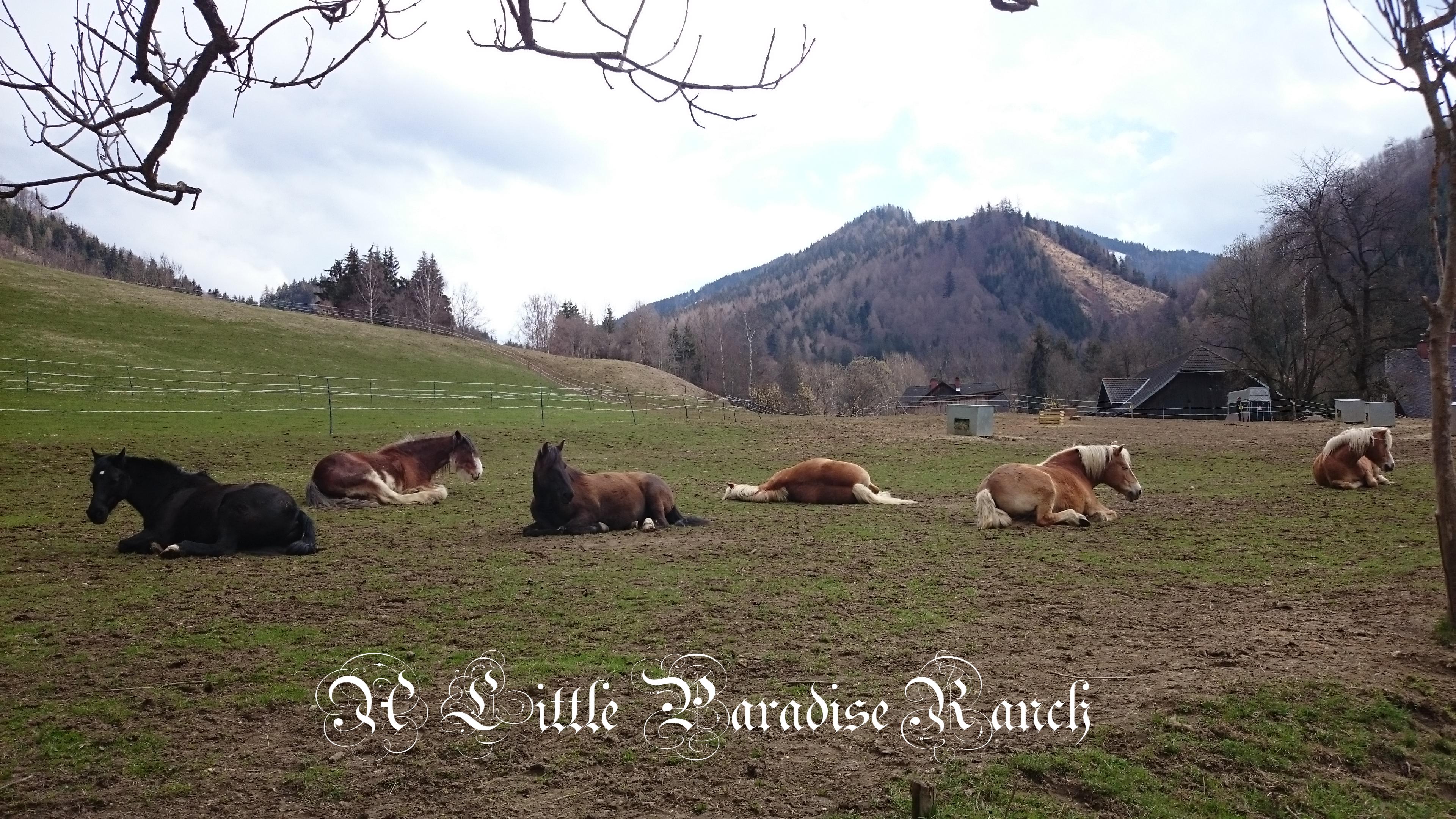 Die Herde bietet Schutz, Vertrauen und Sozialkontakt, die größten Bedürfnisse und ein wichtiger Punkt für die Gesundheit der Pferde. BU: Lisa Spitzer, 2016, ©Lisa Spitzer