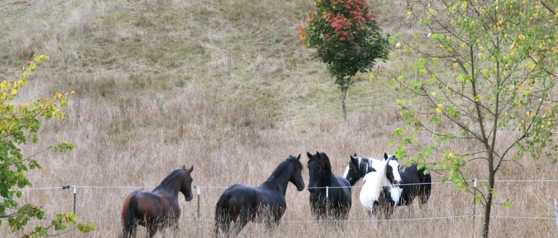 ruhephasen bei alten pferden