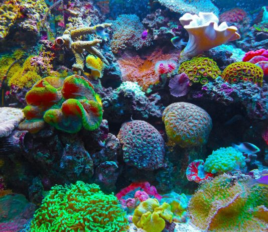 Korallen.