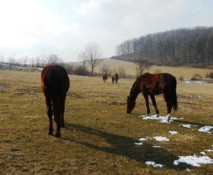 Die Reiter sind unterwegs, die Stute mit ihrem 1-Jährigen lässt sich noch Zeit. Sie wird bald merken, dass die Herde entschwindet und dann schleunigst hinterher galoppieren. © 2018, Foto/BU: Bernd Paschel