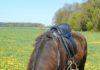Chiko auf einer grünen Wiese bei Karben.