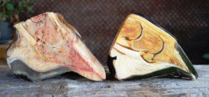 Sohlengewölbe und Sohlendicke im Vergleich: rechts ein gesunder Brumby Huf (Brumby ist ein australisches verwildertes Pferd, ähnlich den amerikanischen Mustang), links ein entsprechend den physiologischen Proportionen ausgeschnittener Kadaverhuf. 2016, BU und © Patrick Spieleder