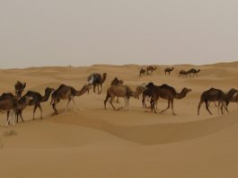 Schiffe in der Wüste.
