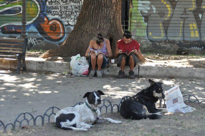 Menschen und Hunde und umgekehrt.