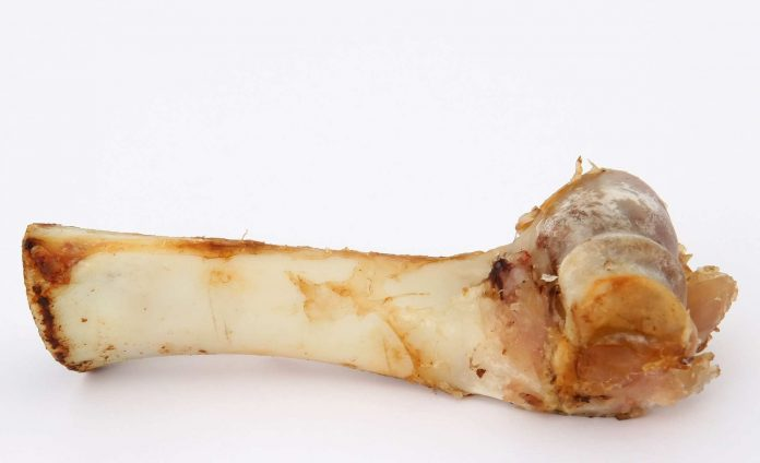 Knochen.