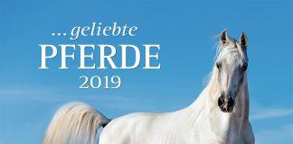 ... geliebte Pferde 2019