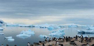 Pinguine.