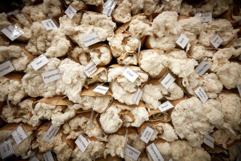Der erste Welttag der Baumwolle steht bevor – am 7. Oktober ist World Cotton Day